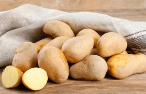 BioLand-Kartoffeln_Erika_gewaschenfarmy-ch-01